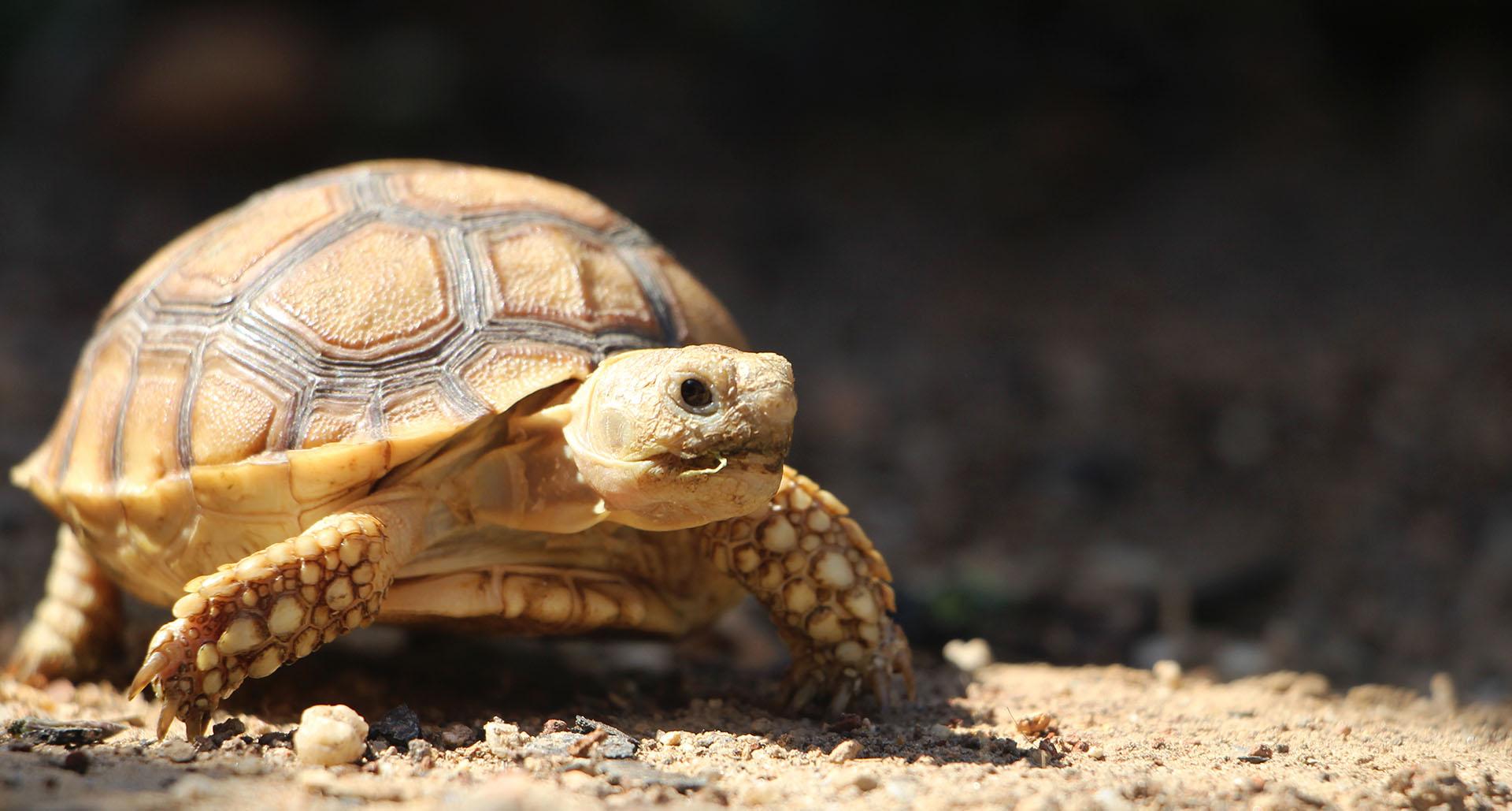 Basic Husbandry for Tortoises